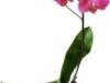 kwiatek-3