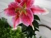 kwiatek-4